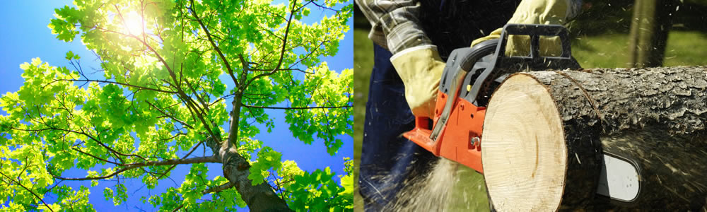 Tree Services Round Rock
